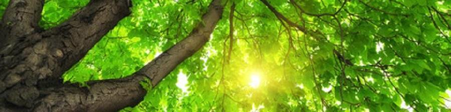 solaris-in-action-plant_a_tree1