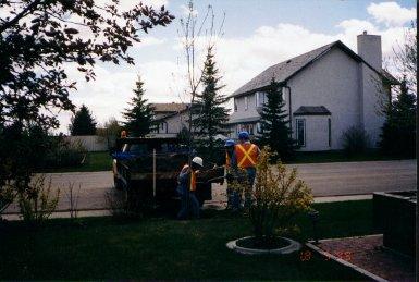 smaller-tree-planting